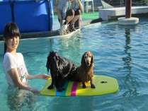 温水プールだから1年中、一緒にご利用頂けます。飼い主様も補助で一緒に入ってわんちゃんプールデビュー♪