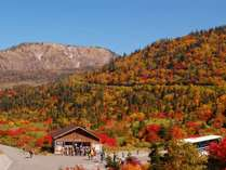 秋を彩る紅葉