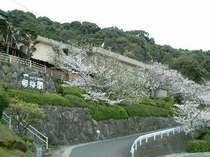 [写真]櫻梅閣