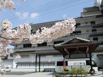 春の風物詩「桜」当館前でも美しく咲く様子が見られます