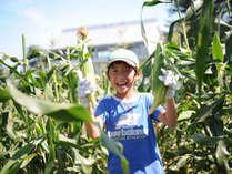 【収穫体験】トウモロコシ収穫体験(7月~8月)