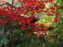 【紅葉】新潟県の紅葉の名所「弥彦公園」へ車で7分/ゆめやの基本プラン