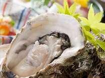 富山湾で取れた「岩牡蠣」新鮮だからプリプリして美味しいです!