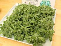【朝食バイキング】ソルトナ。富山湾の海洋深層水で水耕栽培で育てた安全で身体に優しい野菜です。