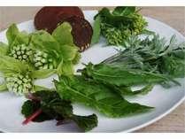 【春をたのしく 春を食べよう】豊かな山菜と取れたて野菜たっぷり★じゃらん限定  東部屋