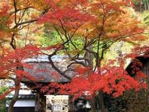 【鎌倉の紅葉】鮮やかに色つく紅葉の秋をお楽しみください。