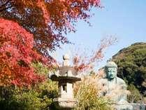 長谷の大仏 (Big Buddha)