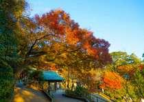 秋の鎌倉はハイキングにぴったり!