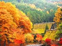 【周辺】秋の高山。燃え立つ紅葉の山々に目を奪われる絶景です。