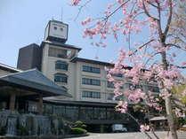 奈良パークホテル正面駐車場に咲く奈良の県花 ナラノヤエザクラ