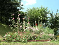 宿根草がメインの花壇