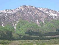 風薫る五月 新緑のかむろ岳