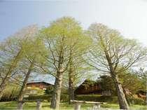 松江市宍道ふるさと森林公園