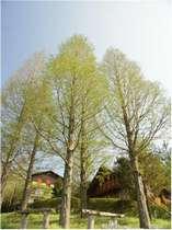木立に囲まれたログハウス・コテージ