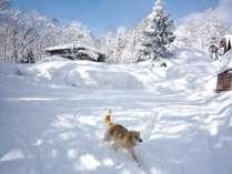 雪の中を猛ダッシュ!