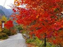 観岳の玄関前の紅葉。10月中旬~11月初旬が見頃です。