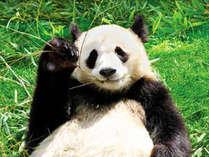 【アト゛ヘ゛ンチャーワールト゛】パンダがご挨拶♪