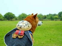 *愛犬と一緒に旅を楽しもう♪
