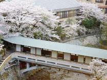 [游月山荘 春] 桜のころ。滝川沿いの桜は幻想的に咲き誇ります。