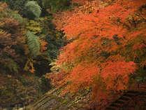 一面に広がる紅葉の移り変わりをお楽しみください。
