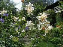 季節の花が咲く広い庭園