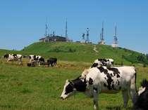 美ヶ原の美しの塔まで歩くのも楽しいです。牧場が広がっています。