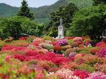 岡谷市の【鶴峯公園】  5月中旬見頃を迎えます!