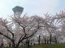 五稜郭公園園内桜が絶景なスポットです♪