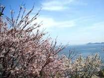 【4月春旅】月末月初限定『美味満彩』プラン