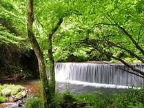 ◆じゃらん限定◆【ポイント10%】~初夏の森で過ごす~湯上りにもお勧め!苺のスパークリングワイン付き