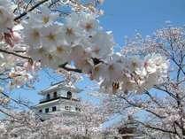 白石城桜風景