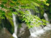 敷地内の辰沢清流にて。散策コースがいくつも設けられ、季節ごとに草花をお楽しみいただけます