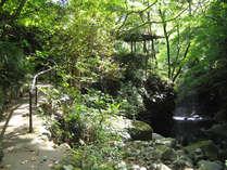 ■湯河原を代表する広大な敷地の万葉公園。清流沿いを散策することができます