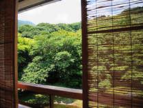■お部屋からの眺め。山に囲まれた奥湯河原は、とても東京から90分とは思えない空間です