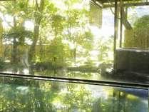緑樹に包まれた大浴場。明治の文豪にも愛された湯河原の名湯をこころゆくまでお楽しみください。