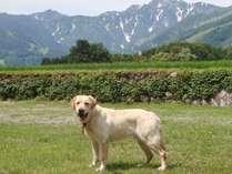 *[ドッグラン]広さ850平米!北アルプスの絶景が目の前に広がる天然芝のドッグラン