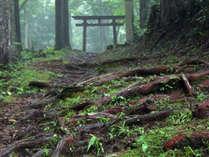 【6月限定】梅雨時の幻想的な熊野古道を散策♪《スポーツドリンク特典☆彡》1泊2食付