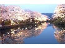 鳥取城跡夜桜ライトアップ