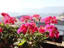 グリーンシーズンにはきれいな花と景観が一望できます
