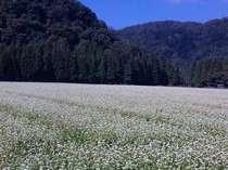大自然に囲まれた貴重な時間を過ごしてくださいね。空気が澄んでます♪