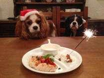 【クリスマス】わんちゃんも一緒にX'mas Dinner♪ディアボラチキンと伊勢海老アメリケーヌ!