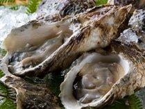 【新鮮食材】旬の味覚~岩牡蠣(かき)~