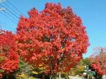 ちから荘近くの美しい紅葉スポット