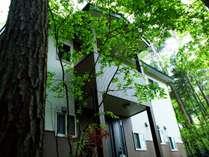 高い木々に囲まれ爽やかで、すがすがしいロケーション