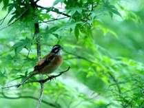 小鳥の優しい歌声でお目覚め photo by zephyrus-8bankan