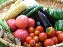 当館は地場野菜にこだわり、安全安心してお召し上がり頂く為、自家農園で低農薬・無農薬野菜を栽培しご提供