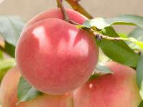 甘い香り、やわらかな果肉、なめらかな岡山の桃をお楽しみください!