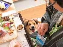 【離れ・わんこ家竹亭】ご夕食も一緒にお部屋でどうぞ♪今日のゴハンは、わんちゃんも何だか楽しそう!