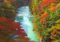 [秋の鬼怒川/お部屋からの眺望]全室から、鬼怒川沿いに色づく紅葉をご覧頂けます。