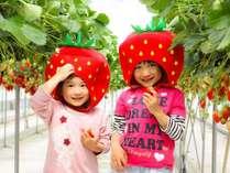 【いちご狩り】大切に育てられたおっきなイチゴを食べ放題♪(ロイヤルストロベリーパーク体験イメージ)